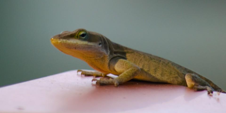 LizardLike